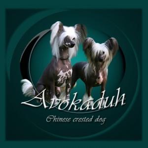 Banner Avokaduh