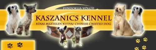 Banner Kaszanics