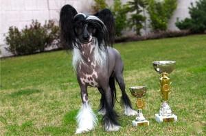 Club dog  show CCD 09.03.2013